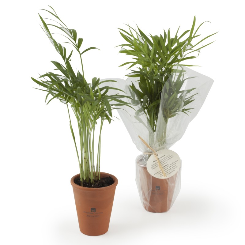 Plante d polluante en pot en cadeau cologique for Plantes vertes discount